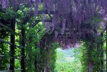 Garden arbors / Garden arbors, arches & pergolas