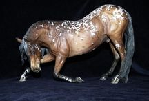 CM Modelhorse bei Nimas Arabians