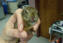 Wildlife / The wild side of  Otterkill Animal Hospital