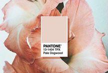 Pantone 2017: Pale Dogwood Wedding