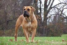 Man's Best Friend / Beautiful dogs...