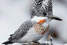 M.kuşlar