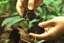 Home: Gardening Tricks / by Lady Daylight
