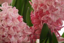 Flower power:)