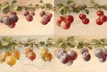barrados frutas e flores