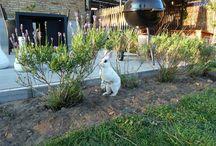 Kaniner i haven / Mine kaniner. Mine kaniner lever som fritgående i haven - vi har hegnet haven ind (der er ikke hæk), og så går de ude 24-7. De har forskellige kasser at søge skjul i, men de bruger dem dog ikke.