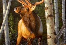 Hirsche / Elk / Elche / Rehe
