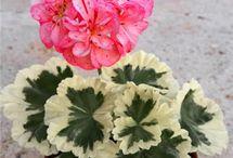 Ghivece cu flori
