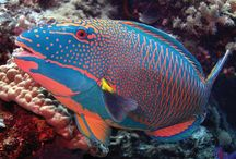 Ψάρια