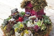 Giardini delle fate in miniatura
