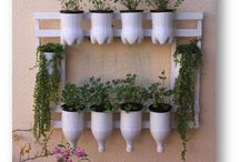 Plantas - Jardinagem