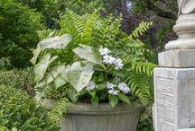 Back patio garden/plants/flowers