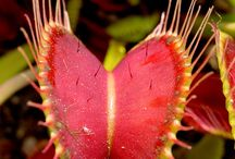 Carnivorous Plants / Carnivorous flowers and plants
