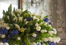 Flores / Rosas Gertrude Stein