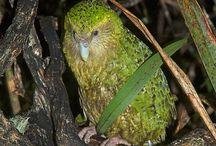 Birds - New Zealand