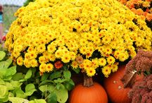 """Fall"" in Love with Your Favorite Stutzmans Garden Center / Just a glimpse of the amazing fall foliage ready to dress up your home for a beautiful autumn touch!"