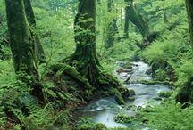 Bush / Forests / Jungle