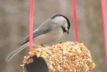 Vogels in de winter