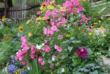 Moja záhradka