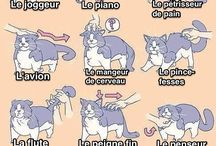 comportements du chat