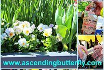 The Daffodil Celebration and Wine Weekend at The New York Botanical Garden / Gardens, Flowers, Daffodils, Wine, Wine Tastings, Spirits, Gin, Bourbon, Licquer, Wine, Rose, Cabernet Savignon, Sauvignon Blanc, Sangria, Wineries, The New York Botanical Garden Events,
