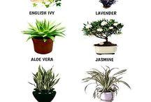 Planter for bedre inneklima