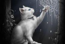 obrázky s kočkou