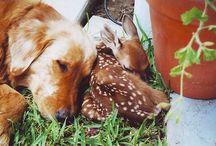 Cute Critters + / by Tammy Iten Gustafson