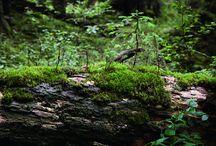 Waldnaturschutz / Bayerns Wälder sind ein unschätzbares Refugium für viele Tier- und Pflanzenarten. Diese Vielfalt zu erhalten und zu mehren, ist eine unserer wichtigsten Aufgaben. Die Bewirtschaftung des bayerischen Staatswaldes erfolgt daher seit vielen Jahren nach den Prinzipien der integrativen und naturnahen Forstwirtschaft. Das bedeutet, dass wir unsere Wälder auf ganzer Fläche bewirtschaften und dabei den Naturschutz fest in unsere Arbeit integrieren.