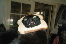 Cats In Bread.