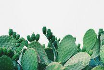 • greenery