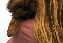 Shih tzu puppy pics of our funny shihtzu puppy.