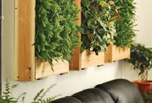 Living Wall for Salon / Greenery For the Salon xoxo