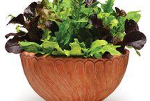 Salads!