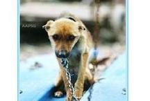 Cruelty / by Animals Voice