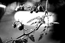 My photo art / I like art and especially photo´s.
