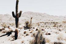 x.desert