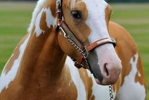I Want A Horse!!!