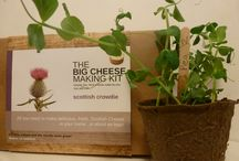 The Big Cheese Making Kit Blog / We have a blog combining news, recipes, and fun stuff!