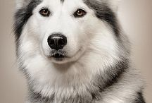 WOlfS / MY favorite ANimals