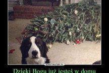 happy (funny) Xmas Polsko / święta (i nie tylko)