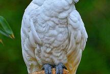 Παπαγάλοικοτα