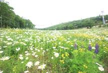 High1's Spring wild flowers.