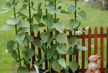 миниатюрные растения