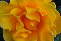 happy yellow
