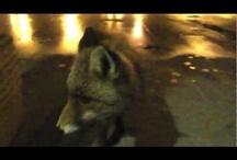 Video / Video Abruzzo,Italy