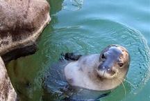 zvířata / Naši krásní spolubydlící na planetě.