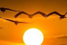 Sun up Sun Down !!