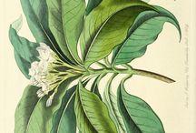 ilustraciones plantas