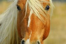 Horses / Horse photos I like